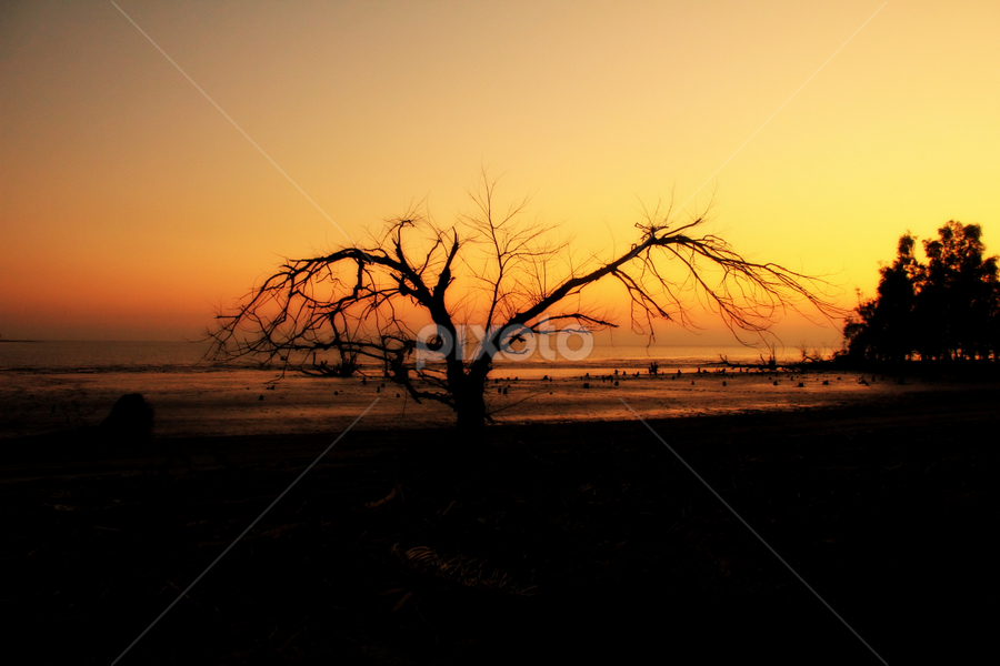 Sunset At Sundorban by Shadat Hossain - Landscapes Forests ( warm, forest, nature, sunset, mangrove, bangladesh, landscape )