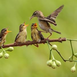 Keep feeding by Bernard Tjandra - Animals Birds