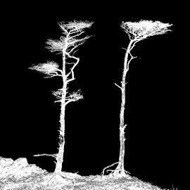 Two by Richard Michael Lingo - Digital Art Things ( abstract, black and white, digital art, trees, things )