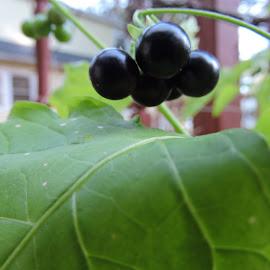 by Susan Thomas - Nature Up Close Gardens & Produce
