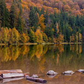 Saint Anne Lake by Catalin Popescu - Landscapes Forests ( water, reflection, autumn, colors, beautiful, romania, forest, lake, landscape, photography, colours )