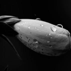 BellFlower by David Benedict - Nature Up Close Flowers - 2011-2013 ( macro, b&w, flower,  )