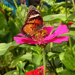 Butterfly n flower 🌸 😍Shot on Xperia X by me👩 ❤ I love this colorful picture😍😘#nofilter by Swati Nairi - Uncategorized All Uncategorized (  )