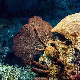 Underwater Still Life.jpg