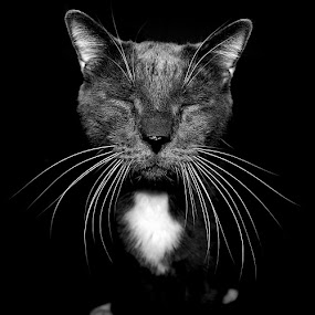 Herb by Freddie Meagher - Animals - Cats Portraits ( cat, black and white, herb, pet )