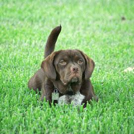 Murphy by Kirk Barnes - Animals - Dogs Portraits ( outdoors, mutt, portrait, dog, pet,  )