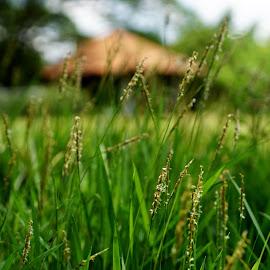 Grasses by Tass Laird - Landscapes Prairies, Meadows & Fields ( field, grass, meadow )