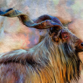 Tajik Markhor by David Hammond - Digital Art Animals ( mammals, animals, manipulations, nature, goat, digital art, tajik markhor, endangered,  )