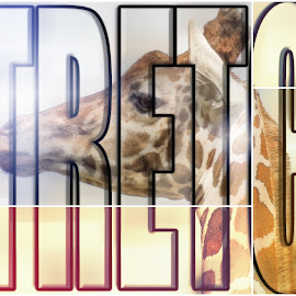 Stretch by Sheen Deis - Typography Captioned Photos ( color, giraffe, stretch, typography )