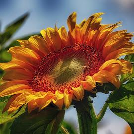 by Constantinescu Adrian Radu - Flowers Single Flower