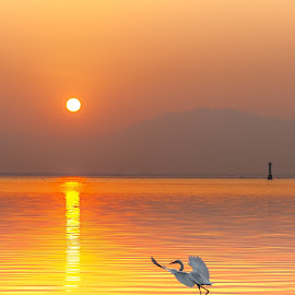 The Moment by Stanley Loong - Landscapes Sunsets & Sunrises ( bird, waterscape, lanscape, warmth, yellow, sunrise, morning, sun,  )