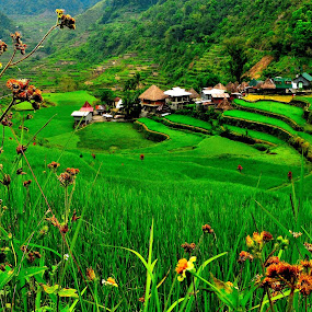 Native Ifugao Village  by Wilbert Quebral - Landscapes Travel