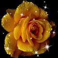 Rose Live Wallpaper APK for Ubuntu