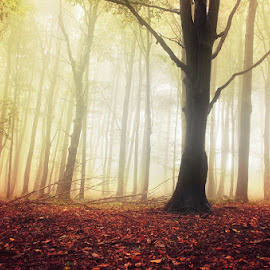 20170916-DSC_1743 by Zsolt Zsigmond - Landscapes Forests ( mystery, forest, beauty in nature, leaf, morning, landscape, sunlight, sun, light - natural phenomenon, magic, season, tree, nature, autumn, fog, outdoors, branch, woodland, sunbeam, mist )