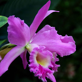 Orchid by Margie Troyer - Flowers Single Flower