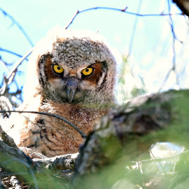 Who's looking at you by Ruth Overmyer - Animals Birds