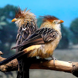 by John Larson - Animals Birds