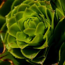 by Amrita Bhattacharyya - Nature Up Close Leaves & Grasses (  )