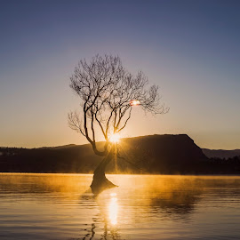 Sunrise and a Lonely Tree by Anupam Hatui - Landscapes Sunsets & Sunrises ( dawn, waterscape, sunrise, landscape, new zealand, mist, lonely tree )