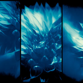 Cyan Flower by Plamen Mirchev - Digital Art Abstract ( abstract art, blue, white, mysterious, abstract, cyan, abstract photography, flower )