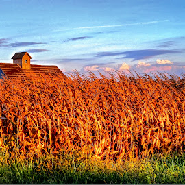 fall barn by Fraya Replinger - Buildings & Architecture Other Exteriors ( barn, autumn, fall, evening, corn )