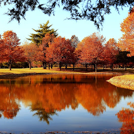 MIRROR IMAGE by Dana Johnson - Landscapes Forests ( reflection, autumn, waterscape, fall, forest, landscape, pond )