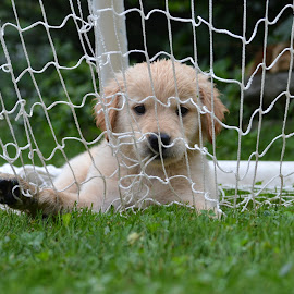 Caught in the net  by Isabelle Largen - Animals - Dogs Puppies