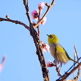 by Vino P - Animals Birds