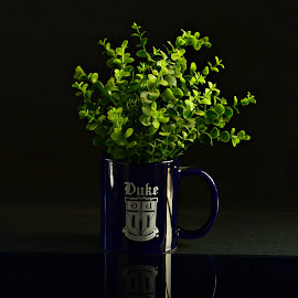 A Bush in a Cup by Prasanta Das - Artistic Objects Cups, Plates & Utensils ( composition, bush )