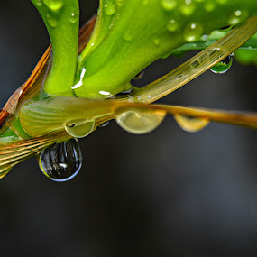by Acai Ibrahim - Nature Up Close Water