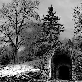 history by Aleksandar Z Dimitrijević - Landscapes Forests ( pwcbwlandscapes )