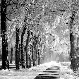 Snowy lane. by Gert de Vos - Black & White Landscapes
