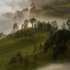Green in the misty by Agus Sudharnoko - Landscapes Mountains & Hills
