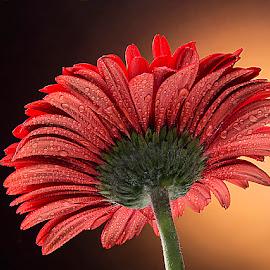 JSR by Rakesh Syal - Flowers Single Flower