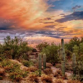 Spring Break by Charlie Alolkoy - Landscapes Deserts ( clouds, desert, sunset, arizona, tucson, weather, sunrise, storm, cactus )
