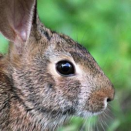 by Christine Warner - Animals Other Mammals (  )
