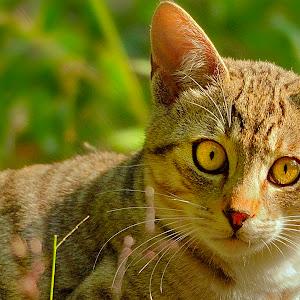 Cat processed Feb 14.jpg
