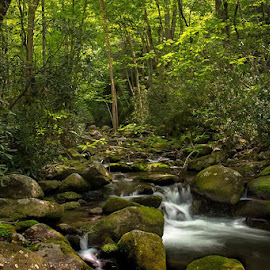 A babbaling creek trail by Gary Strein - Nature Up Close Water ( babbaling creek, gary strein, great smoky mountains tn )