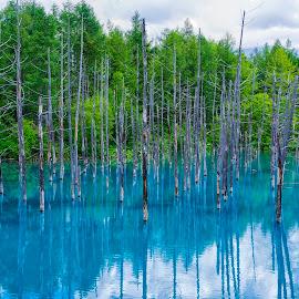 Blue Pond by Crispin Lee - Landscapes Forests