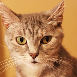 by Joyce Williams Carr - Animals - Cats Portraits