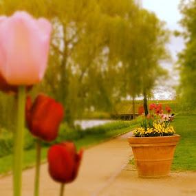 Spring flowers by Aleksey Maksimov - Instagram & Mobile Instagram