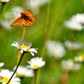 Take Off by Jennifer Parmelee - Animals Amphibians ( butterfly, wings, colors, places, flowers )