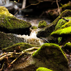 Wet Weather Stream by Eugene Linzy - Nature Up Close Rock & Stone ( water, stream, moss, moss covered, rocks )
