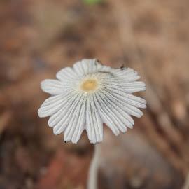 by Anuroop Prabhakaran - Nature Up Close Mushrooms & Fungi
