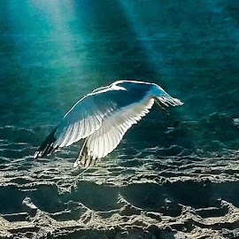 Seagull by Anne LiConti - Instagram & Mobile Android ( #phonephoto, #mobilephoto, #mobile, #seagull, #instagram, #android )