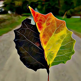 Colors of Vermont  by Irina Aspinall - Digital Art Things ( colors, folliage, fall, digital art, multicolor, leaf, vermont )