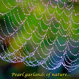 Pearl garlands... by Asif Bora - Typography Captioned Photos