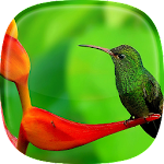 Birds Live Wallpaper ? Beautiful Pictures Icon
