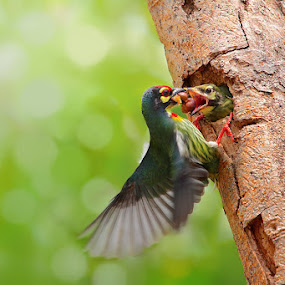 Feeding by Sasi- Smit - Animals Birds