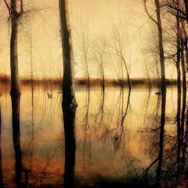 by Otto Mercik - Landscapes Forests